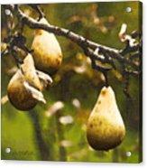Fall Harvest Acrylic Print by Barb Pearson