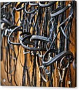 Horse Bridles Hanging In Stable Acrylic Print by Elena Elisseeva