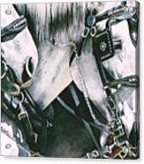 4 Grays Acrylic Print by Nadi Spencer