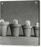 4 Pots Acrylic Print by Anne Geddes