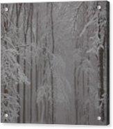 Winter Acrylic Print by Gabriela Insuratelu