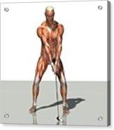 Male Muscles, Artwork Acrylic Print by Friedrich Saurer