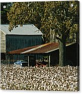 A Cotton Field Surrounds A Small Farm Acrylic Print by Medford Taylor