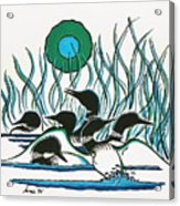 A Family Of Loons Acrylic Print by Arnold Isbister