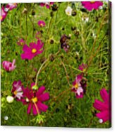 A Field Of Wild Flowers Growing Acrylic Print by Todd Gipstein