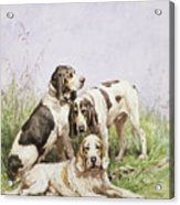 A Group Of French Hounds Acrylic Print by Charles Oliver de Penne