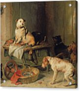 A Jack In Office Acrylic Print by Sir Edwin Landseer