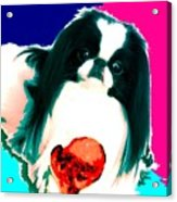 A Japanese Chin And His Toy Acrylic Print by Kathleen Sepulveda