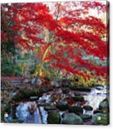 A Japanese Maple With Colorful, Red Acrylic Print by Darlyne A. Murawski