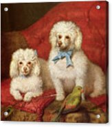 A Pair Of Poodles Acrylic Print by English School