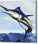 A Sleek Blue Marlin Bursts Acrylic Print by Corey Ford