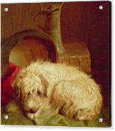 A Terrier Acrylic Print by John Fitz Marshall