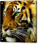 A Tiger's Stare Acrylic Print by Ricky Barnard