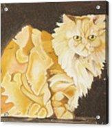 Abstract Cat Acrylic Print by Joseph Palotas