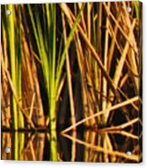 Abstract Reeds Triptych Top Acrylic Print by Steven Sparks