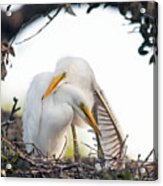 Affectionate Chicks Acrylic Print by Kenneth Albin