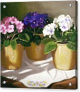 African Violets Acrylic Print by Linda Jacobus