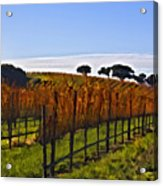 After The Harvest Acrylic Print by Patricia Stalter