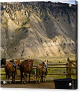 After The Ride Acrylic Print by Patrick  Flynn