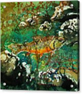 All About Trout Acrylic Print by Sue Duda
