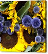 Allium And Sunflowers Acrylic Print by Jane Rix