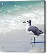 Alone On The Beach Acrylic Print by Thomas R Fletcher