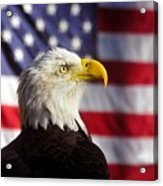 American Eagle Acrylic Print by David Lee Thompson