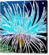 An Abstract Scene Of Sea Anemone 1 Acrylic Print by Lanjee Chee