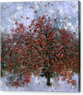 An Apple Of A Day Acrylic Print by Julie Lueders