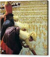 An Italian Rice Field Acrylic Print by Angelo Morbelli