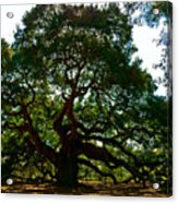 Angel Oak Tree 2004 Acrylic Print by Louis Dallara
