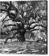 Angel Oak Tree Black And White Acrylic Print by Melanie Snipes