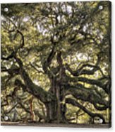 Angel Oak Tree Live Oak  Acrylic Print by Dustin K Ryan