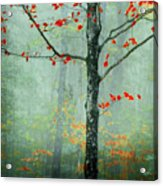Another Day Another Fairytale Acrylic Print by Katya Horner