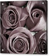 Antique Roses Acrylic Print by Edward Fielding