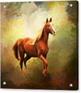 Arabian Horse Acrylic Print by Jai Johnson