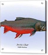Arctic Charr Acrylic Print by Ralph Martens