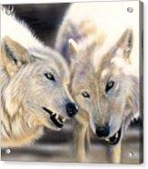 Arctic Pair Acrylic Print by Sandi Baker