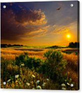 Aridity Acrylic Print by Phil Koch