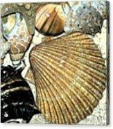 Art Shell 2 Acrylic Print by Stephanie Troxell
