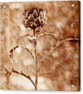 Artichoke Bloom Acrylic Print by La Rae  Roberts