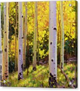 Aspen Symphony Acrylic Print by Gary Kim
