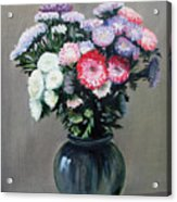 Asters Acrylic Print by Paul Walsh