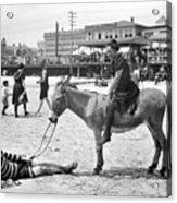 Atlantic City: Donkey Acrylic Print by Granger
