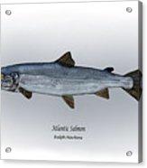 Atlantic Salmon Acrylic Print by Ralph Martens