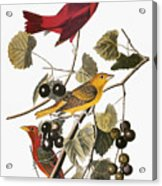 Audubon: Tanager Acrylic Print by Granger