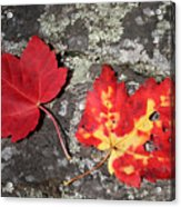 Autumn Colors Acrylic Print by Kate  Leikin