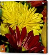 Autumn Colors Acrylic Print by Patricia Griffin Brett