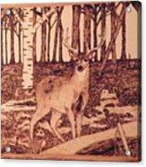 Autumn Deer Acrylic Print by Andrew Siecienski