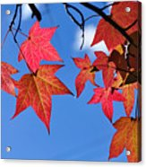 Autumn In The Sky Acrylic Print by Kaye Menner